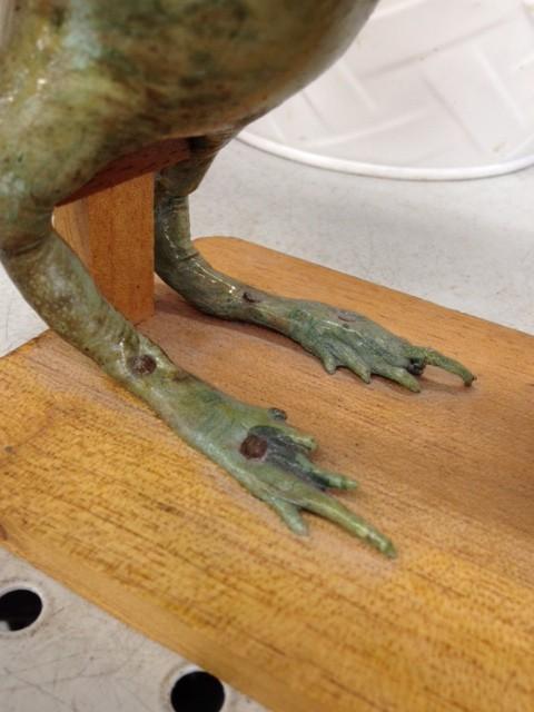 nailed frog feet